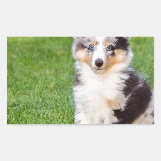 One young sheltie dog sitting on grass rectangular sticker