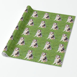 One young sheltie dog sitting on grass wrapping paper