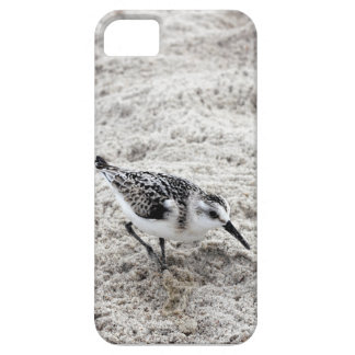One Young Snowy Plover Bird Case For The iPhone 5