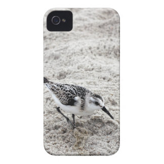 One Young Snowy Plover Bird Case-Mate iPhone 4 Cases