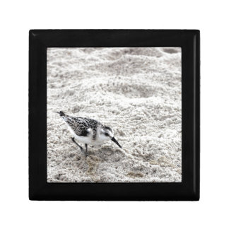 One Young Snowy Plover Bird Gift Box
