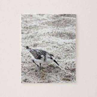 One Young Snowy Plover Bird Jigsaw Puzzle