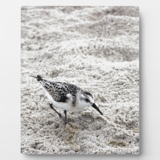 One Young Snowy Plover Bird Plaques