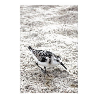One Young Snowy Plover Bird Stationery