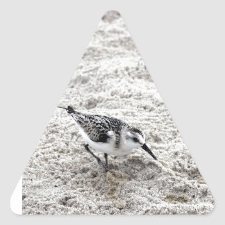 One Young Snowy Plover Bird Triangle Sticker