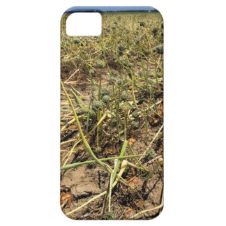 Onion Field Landscape Case For The iPhone 5