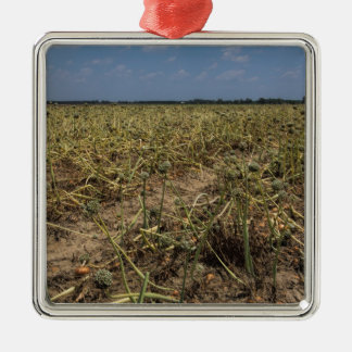 Onion Field Landscape in Georgia Silver-Colored Square Decoration