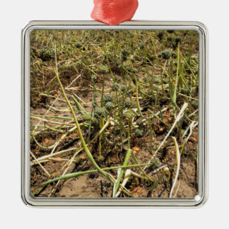 Onion Field Landscape Silver-Colored Square Decoration