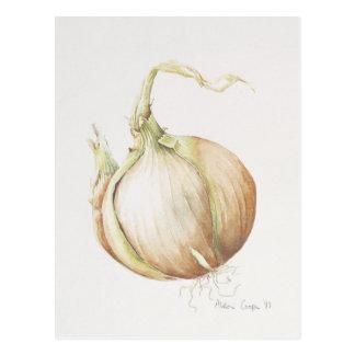 Onion Study 1993 Postcard