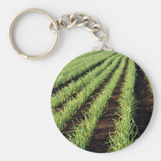 Onions, Grand Bend, Ontario, Canada at the Cornish Key Chains
