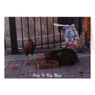 """Only In Key West"" Cat & Rooster Photo Card"