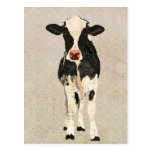 Onyx & Ivory Cow Postcard