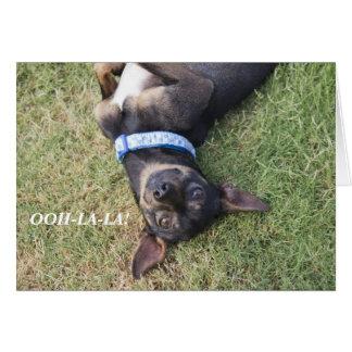 Ooh-la-la Chihuahua Birthday Card