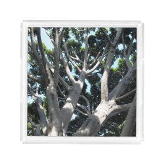 oOld Fig Tree