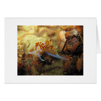 Opalescent Nudibranch Card