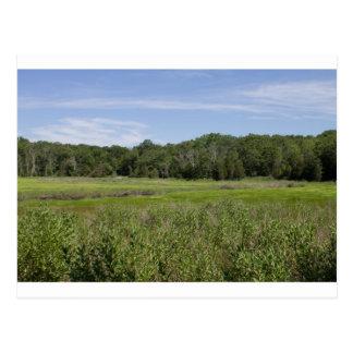 open field touisset wildlife refuge warren RI Postcard