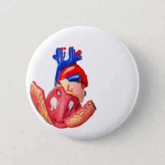 Open model human heart on white background 6 cm round badge