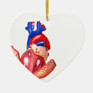 Open model human heart on white background ceramic ornament