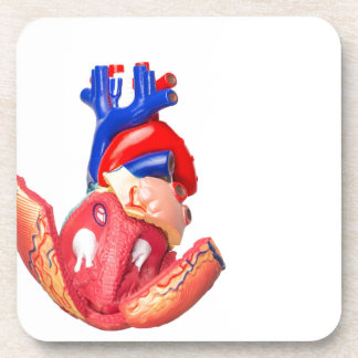 Open model human heart on white background coaster