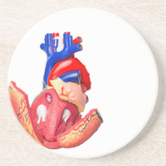 Open model human heart on white background coasters