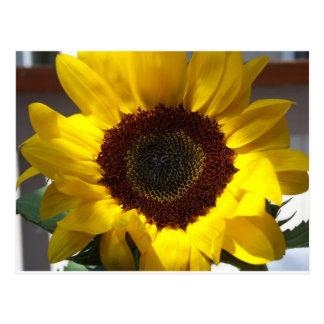 Open Sunflower Postcard