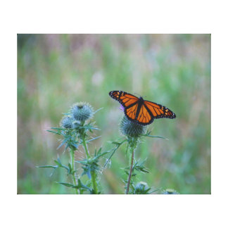 Open winged beauty gallery wrapped canvas
