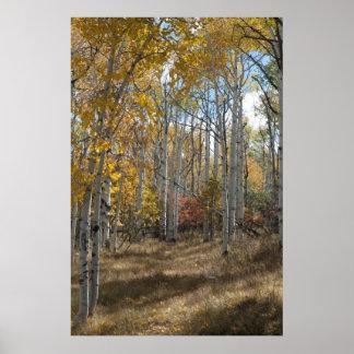 Open Woods Poster