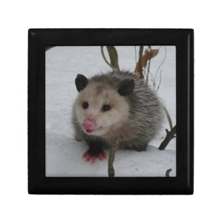 Opossum Gift Box