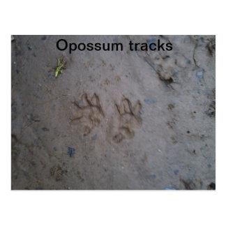 Opossum tracks postcard