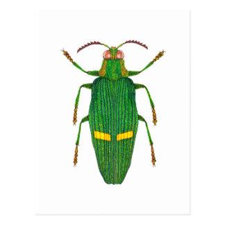 Opulent jewel beetle postcard