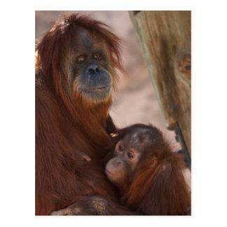 Orang Mom and Child Postcard