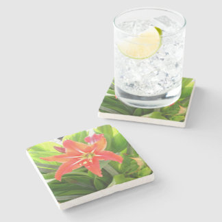 Orange Amaryllis Flower Blooms in Springtime Stone Coaster