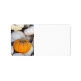 Orange among white pumpkins address label