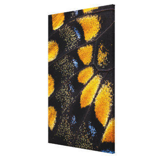 Orange and black butterfly wing canvas print