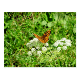 Orange and Black Butterfly with your text Postcard