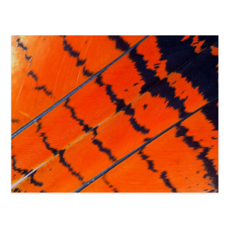 Orange And Black Cockatoo Feathers Postcard