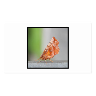 Orange and Brown Moth. Business Card Templates