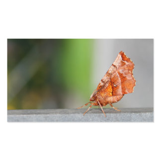 Orange and Brown Moth. Business Card