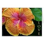 Orange and pink hibiscus greeting card