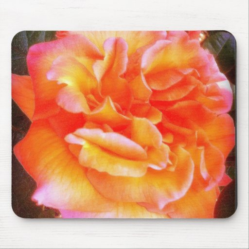 Orange and Pink Rose Mouse Pad