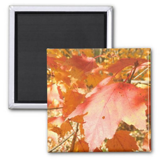 Orange and Red Fall Leaves Refrigerator Magnets