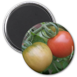 Orange and Red Tomatoes Magnet
