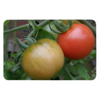 Orange and Red Tomatoes Premium Magnet