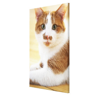 orange and white cat looking at camera gallery wrap canvas