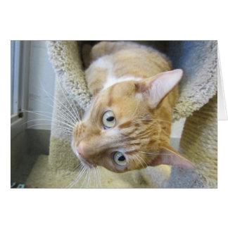Orange and White Tabby Cat Card