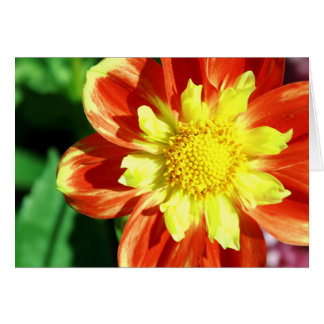 Orange and Yellow Flower Note Card