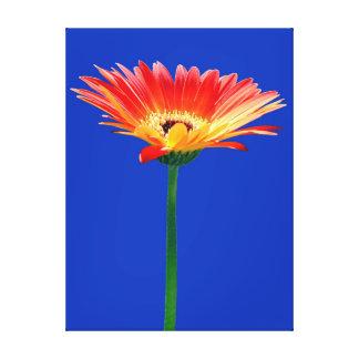 Orange and Yellow Gerbera Daisy Canvas Prints