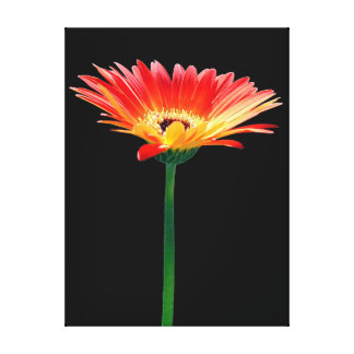 Orange and Yellow Gerbera Daisy Stretched Canvas Prints