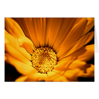 Orange and Yellow Gerbera Daisy Card