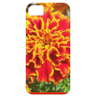 Orange and Yellow Marigold iPhone 5 Cover